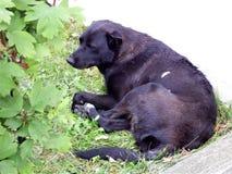 Perros perdidos urbanos Imagenes de archivo