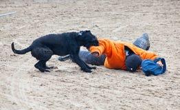 Perros policía en el trabajo Fotografía de archivo