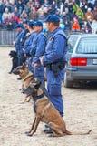 Perros policía en el trabajo Imagen de archivo libre de regalías