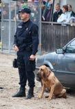 Perros policía en el trabajo Foto de archivo libre de regalías