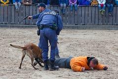Perros policía en el trabajo Fotos de archivo