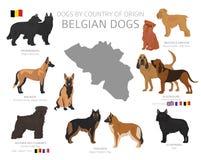 Perros por el pa?s de origen Razas belgas del perro Sistema de los perros de los pastores, de la caza, de la reuni?n, del juguete libre illustration