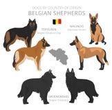 Perros por el pa?s de origen Razas belgas del perro Sistema de los perros de los pastores, de la caza, de la reuni?n, del juguete stock de ilustración