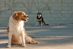 Perros por un muro de cemento urbano marcado con etiqueta pintada foto de archivo