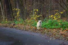 perros que corren en el camino Foto de archivo