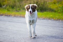 perros que corren en el camino del otoño Fotos de archivo libres de regalías