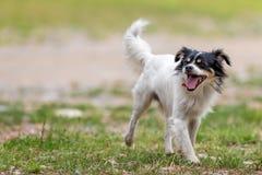 Perros que corren en el parque Fotografía de archivo