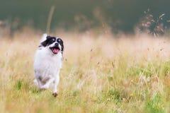 Perros que corren en el parque Imagen de archivo