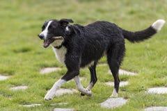 Perros que corren en el parque Foto de archivo