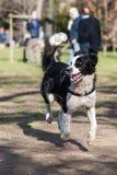 Perros que corren en el parque Imagenes de archivo