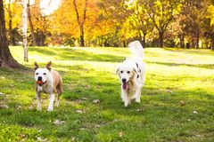 Perros que corren en el parque de la ciudad Fotos de archivo