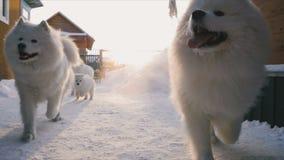 Perros que corren a la puerta almacen de metraje de vídeo