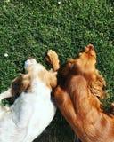 Perros que disfrutan de verano fotografía de archivo libre de regalías