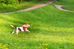 Perros que juegan en el parque Imagen de archivo