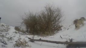 Perros que juegan en invierno almacen de video