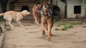 Perros que juegan en la galería en el diagrama Cuarto de niños canino Hotel para los perros almacen de video