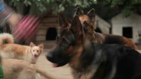 Perros que juegan en la galería en el diagrama Cuarto de niños canino Hotel para los perros almacen de metraje de vídeo