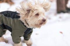 Perros que juegan en la nieve en invierno Imagen de archivo libre de regalías