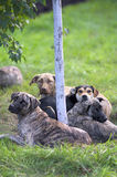 Perros que mienten alrededor de un árbol imagen de archivo