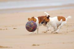 Perros que persiguen una bola fotografía de archivo libre de regalías