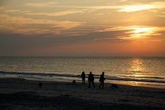 Perros que recorren de la gente en la playa del amanecer Foto de archivo libre de regalías