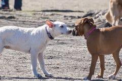 Perros que se encuentran en el parque del perro Foto de archivo