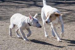 Perros que se encuentran en el parque del perro Imagenes de archivo