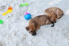Perros que se relajan y que descansan, mintiendo en la arena en la playa el días de fiesta de las vacaciones de verano foto de archivo libre de regalías