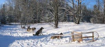 Perros que tienen cierto resto - Dogsledding - Quebec - panorama Fotos de archivo libres de regalías