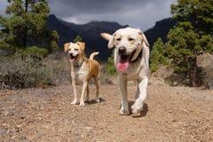 Perros rubios lindos en la naturaleza Imagenes de archivo