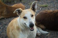 Perros sin hogar en la calle Fotografía de archivo