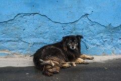 Perros sin hogar pets Los perros están caminando en la calle El perro ha perdido a su dueño fotografía de archivo