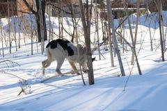 Perros sin hogar pets Los perros están caminando en la calle El perro ha perdido a su dueño imagen de archivo libre de regalías