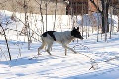 Perros sin hogar pets Los perros están caminando en la calle El perro ha perdido a su dueño imagenes de archivo