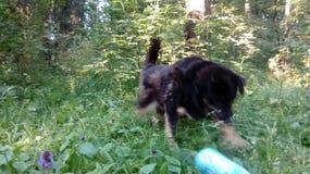 Perros sin hogar pets Los perros están caminando en la calle El perro ha perdido a su dueño fotos de archivo