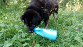 Perros sin hogar pets Los perros están caminando en la calle El perro ha perdido a su dueño foto de archivo