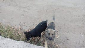 Perros sin hogar pets Los perros están caminando en la calle El perro ha perdido a su dueño imagen de archivo
