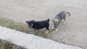 Perros sin hogar pets Los perros están caminando en la calle El perro ha perdido a su dueño foto de archivo libre de regalías