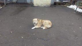 Perros sin hogar pets Los perros están caminando en la calle El perro ha perdido a su dueño fotos de archivo libres de regalías