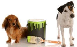 Perros traviesos Imagen de archivo