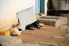 Perros tristes Imagenes de archivo