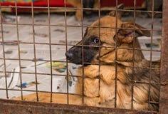 Perros tristes en una jaula de un refugio Foto de archivo libre de regalías
