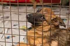 Perros tristes en una jaula de un refugio Fotos de archivo