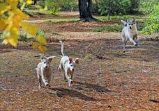 Perros vagabundos jovenes Imagenes de archivo