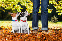 Perros y dueño fotografía de archivo