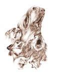 Perros y gato del descortezamiento Fotografía de archivo libre de regalías