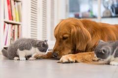 Perros y gatos fotografía de archivo libre de regalías