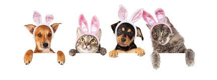 Perros y gatos de Pascua que cuelgan sobre la bandera blanca Foto de archivo