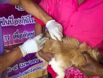 perros y gatos en el día de la rabia del mundo, esterilización quirúrgica de perros, vacuna de la rabia de los gatos fotografía de archivo