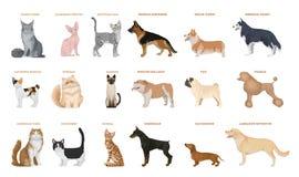 Perros y gatos fijados Fotografía de archivo